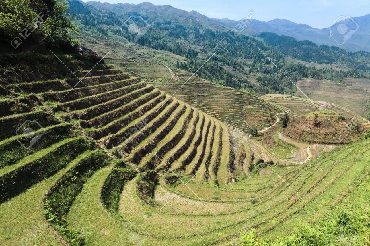 La Construcción De Terrazas En Primavera El Cultivo De La Civilización Hermosas Curvas Y Líneas
