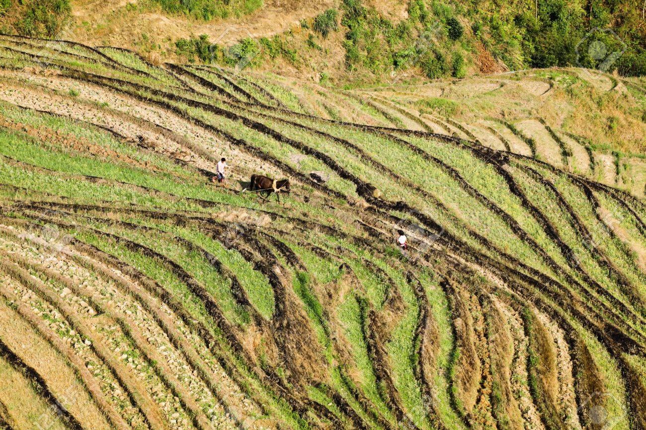 La Coltivazione A Terrazze Campi In Primavera, Lo Stile Di Vita ...