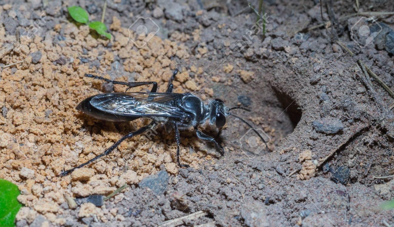 Die Insekten Wurden Löcher Graben Im Garten Lizenzfreie Fotos