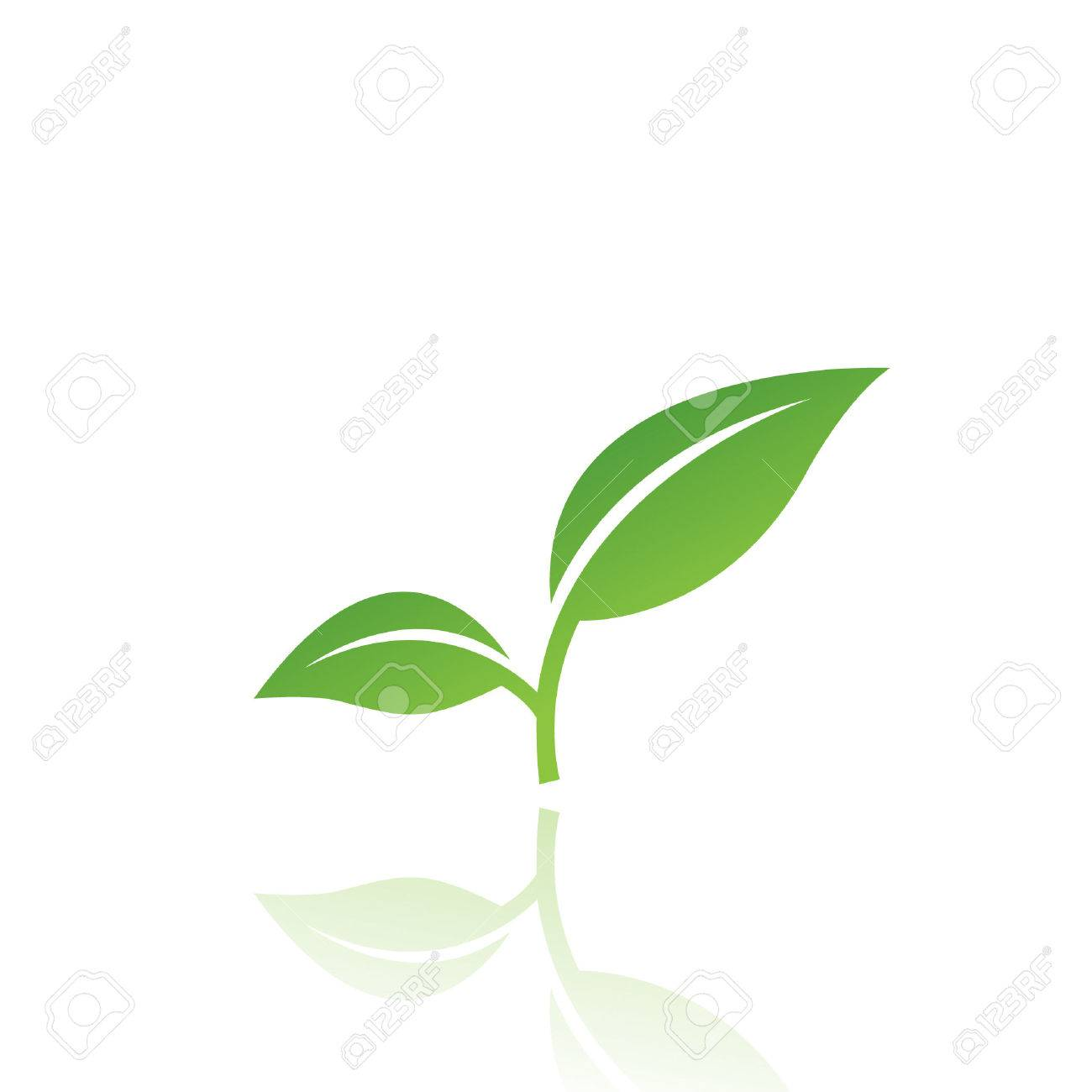Green leaf isolated on white Stock Vector - 7276421
