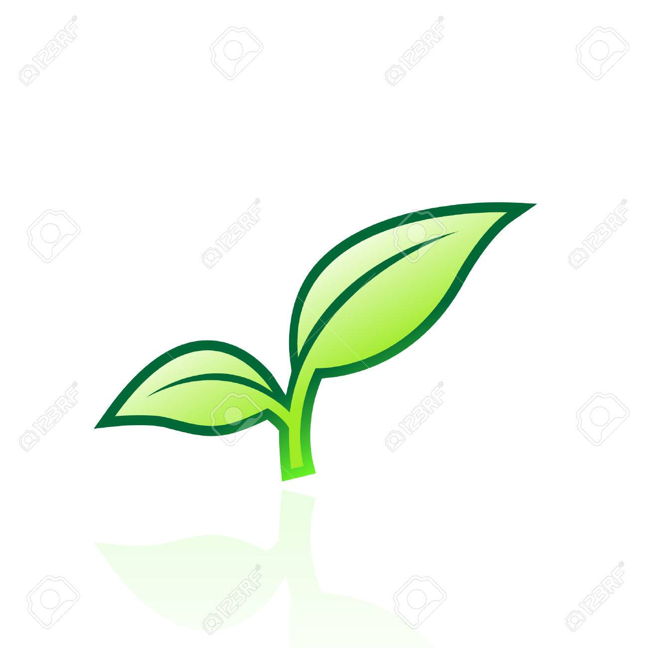 Glossy green leaf isolated on white Stock Vector - 7276454