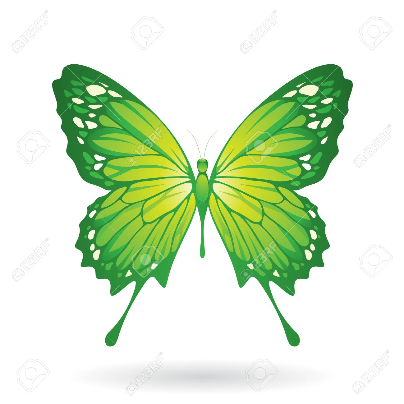 Vector Illustration Of A Colorful Butterfly Isolated On A White ...