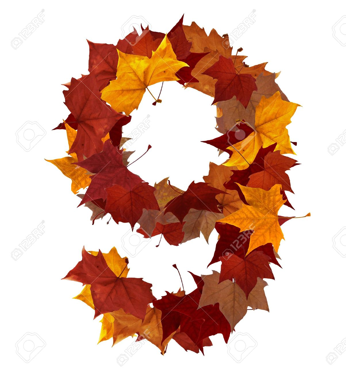 Number 9 Made With Autumn Leaves Isolated On White Clipping Paths Find Others