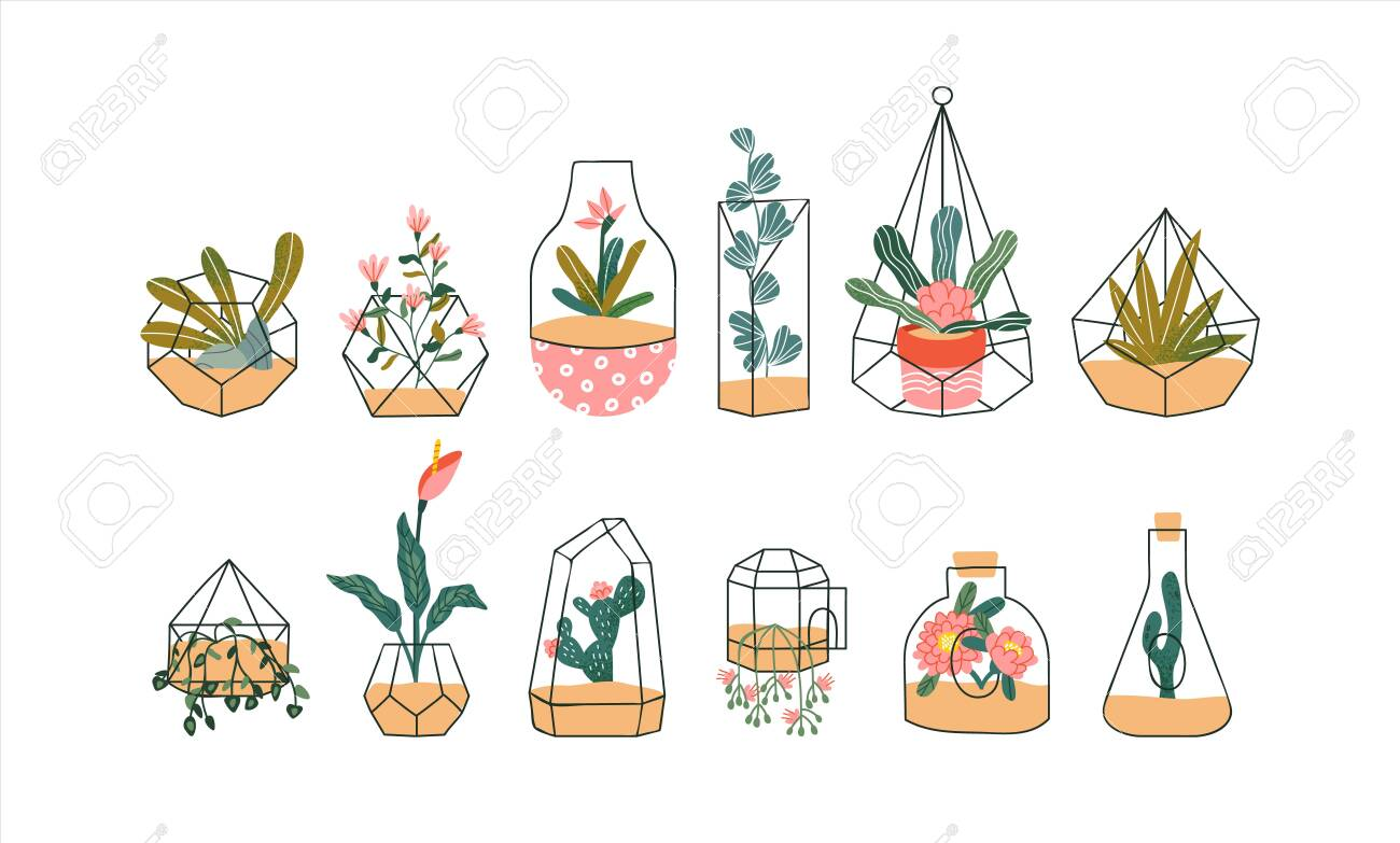 Set Of Cute Glass Terrarium With Exotic Tropical House Plant Royalty Free Cliparts Vectors And Stock Illustration Image 140391650