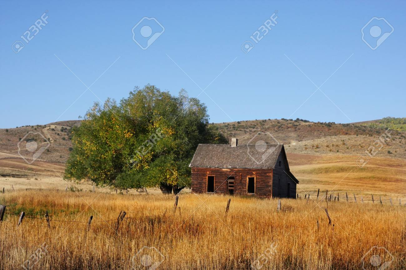 Deserted Farm with wheat grassand blue skys Stock Photo - 3629415