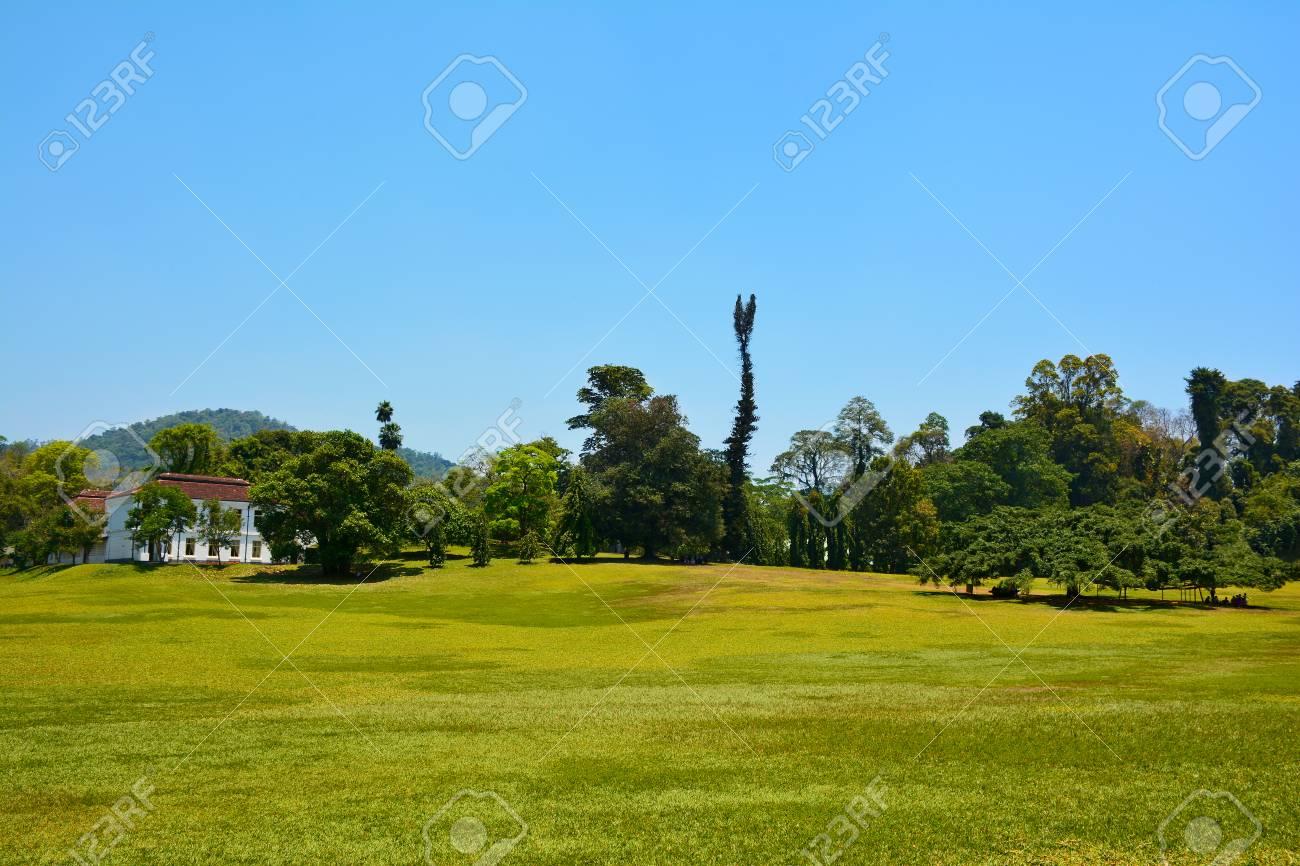 Immagini Di Piante E Alberi prato verde e varietà di piante e alberi nel giardino botanico reale  peradeniya, che si trova a kandy (sri lanka)