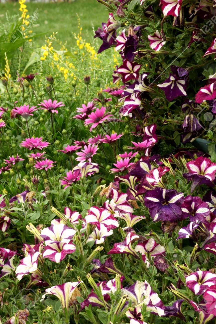 botanical garden, the the colorful flowerbed Stock Photo - 10031593