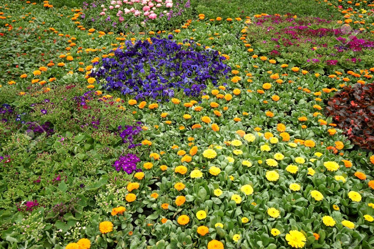 Colorful flowerbed Stock Photo - 11713456