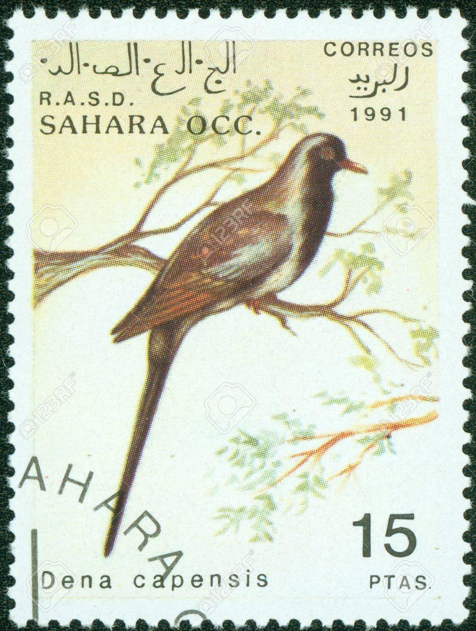 SAHARA OCC RASD - CIRCA 1991  A stamp printed in Sahara OCC  R A S D showing bird dena capensis , circa 1991 Stock Photo - 14778413