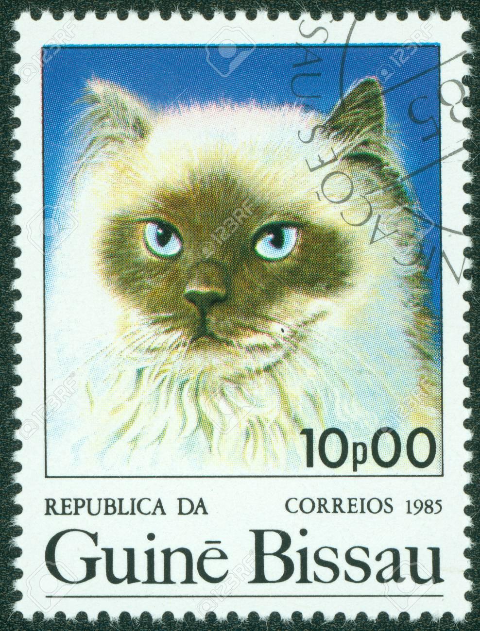 GUINEA - CIRCA 1985  A stamp printed in Guinea shows cat, circa 1985  Stock Photo - 15854912