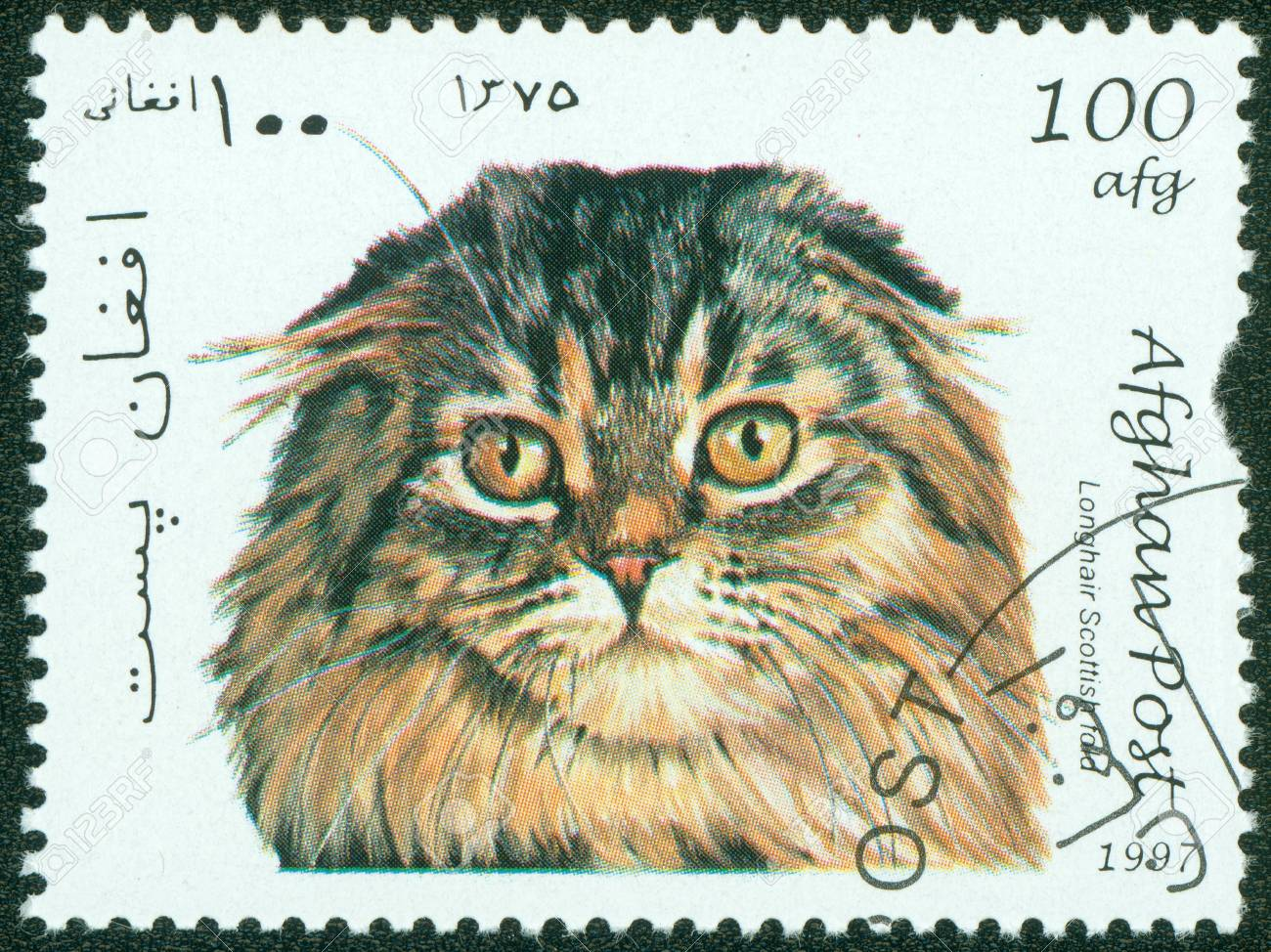 AFGHANISTAN - CIRCA 1997  mail stamp printed in Afghanistan featuring a pedigree Scottish Longhair Fold cat, circa 1997 Stock Photo - 15854911