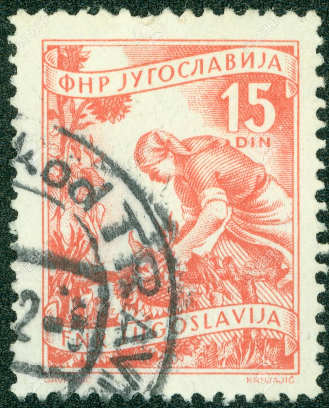YUGOSLAVIA - CIRCA 1950  A stamp printed in Yugoslavia shows woman picking sunflowers, circa 1950 Stock Photo - 16043027