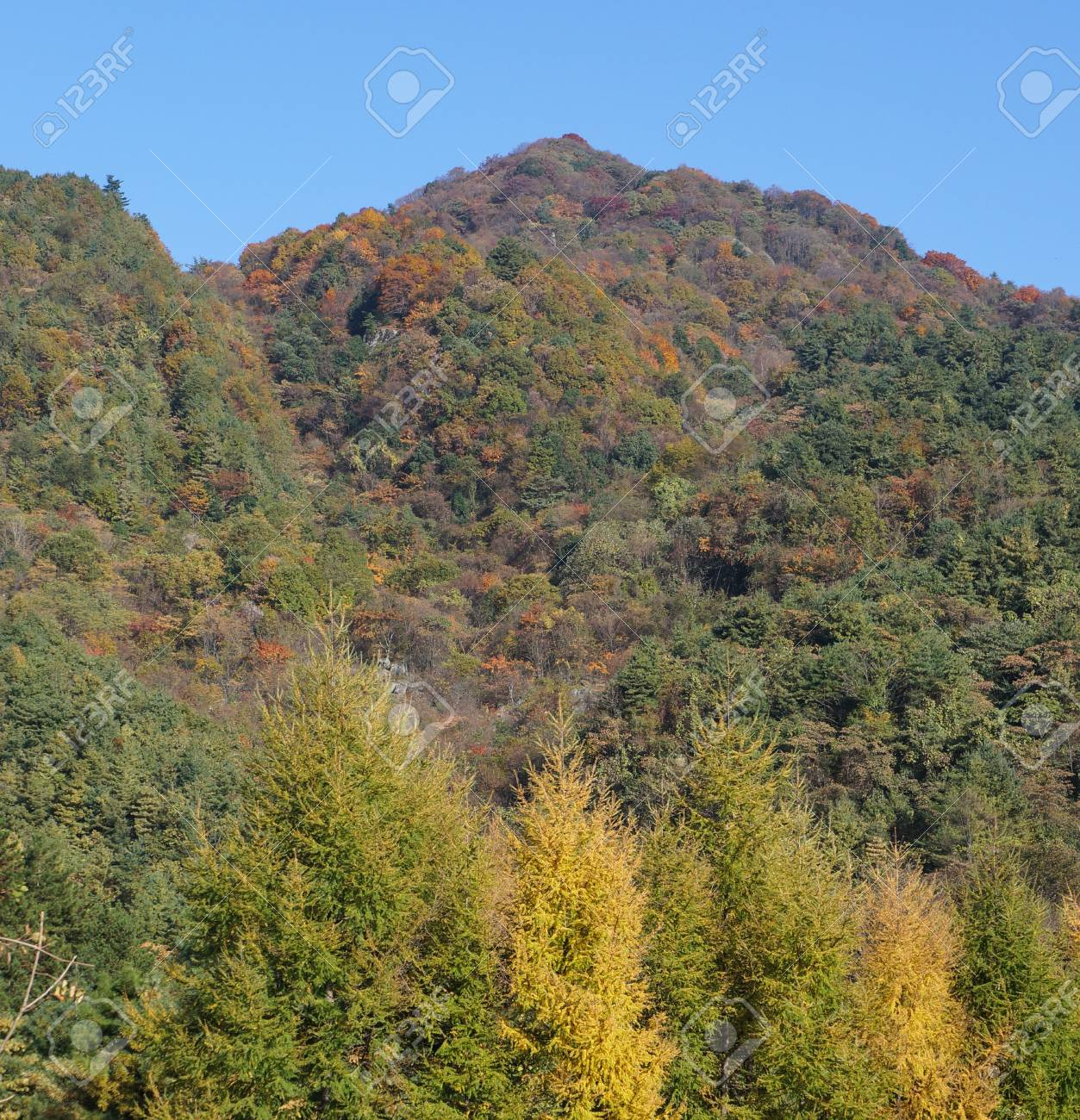 Forest in autumn Stock Photo - 16059492
