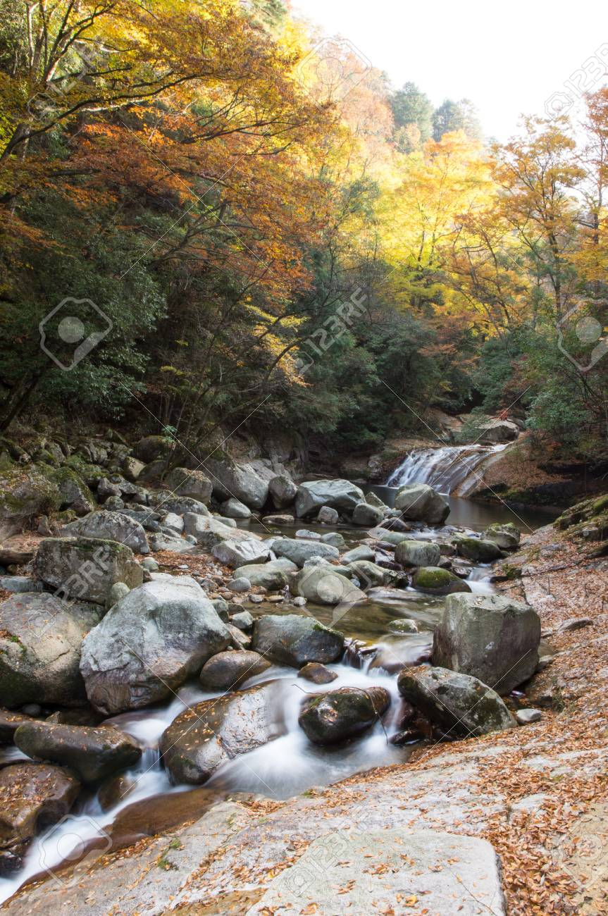autumn,forest and stream Stock Photo - 16137150