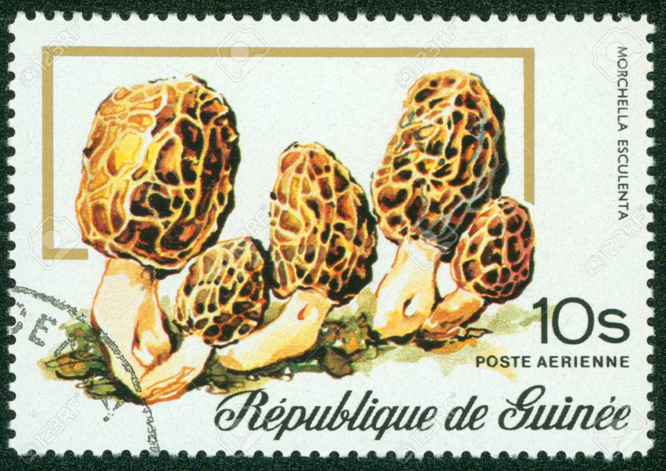 GUINEA - CIRCA 1977  stamp printed by Guinea, shows mushroom, circa 1977 Stock Photo - 16302120