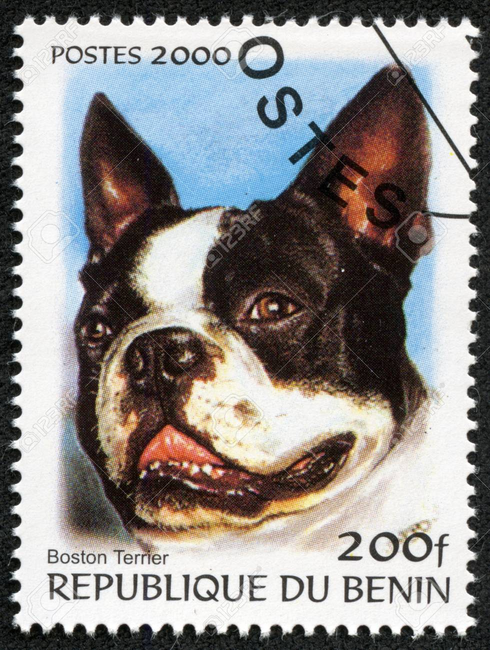 BENIN - CIRCA 2000  A stamp printed in BENIN,shows a dog, circa 2000 Stock Photo - 17261709