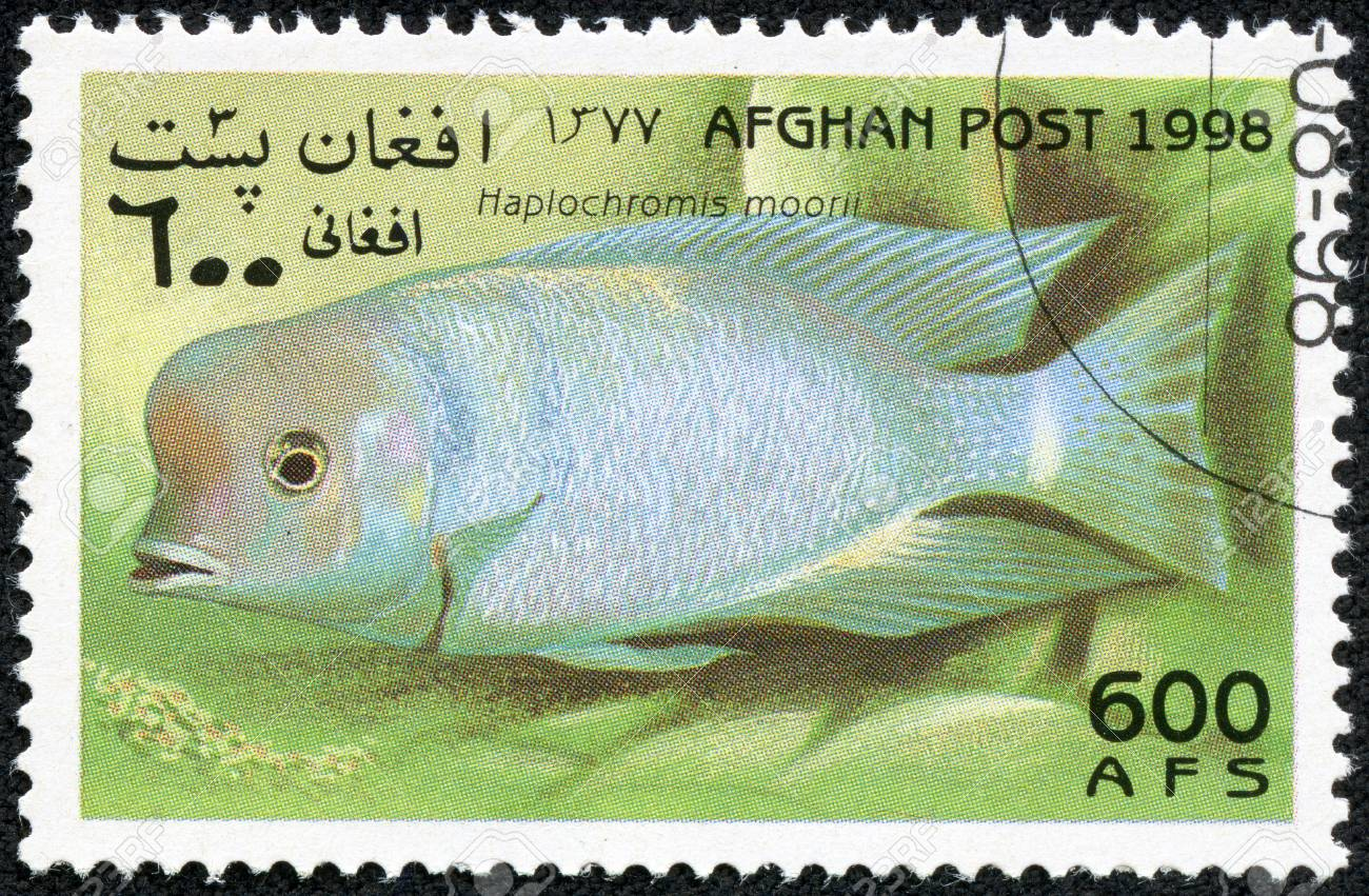 AFGHANISTAN - CIRCA 1998  A stamp printed in Afghanistan showing Haplochromis moorii, circa 1998 Stock Photo - 18368335
