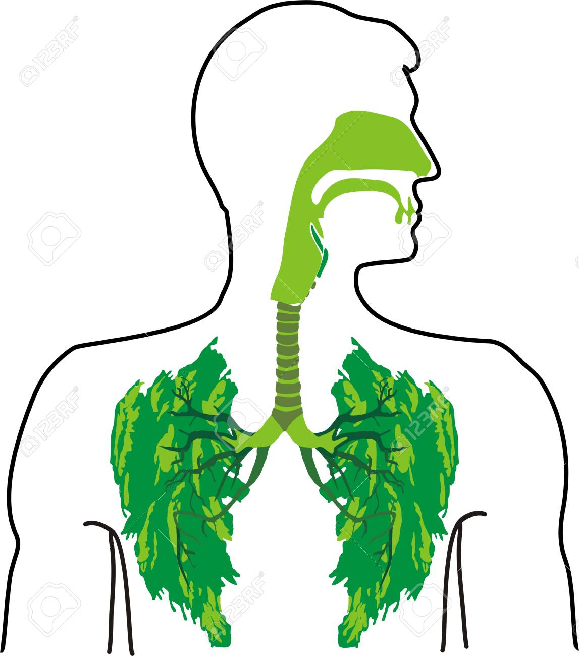 Green Lung In The Open Air Royalty Free Cliparts Vectors And