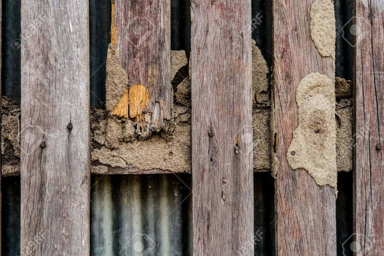 Termite Damage On Brown Wooden Fence Stock Photo Picture And Royalty Free Image Image 78497849