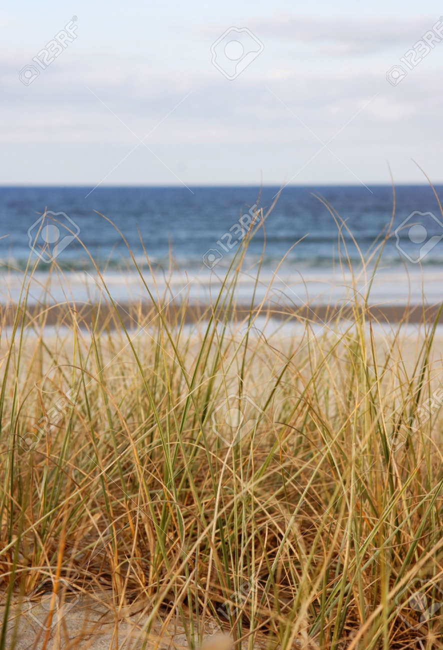 Beach grass overlooking the sea in NZ Stock Photo - 1051597