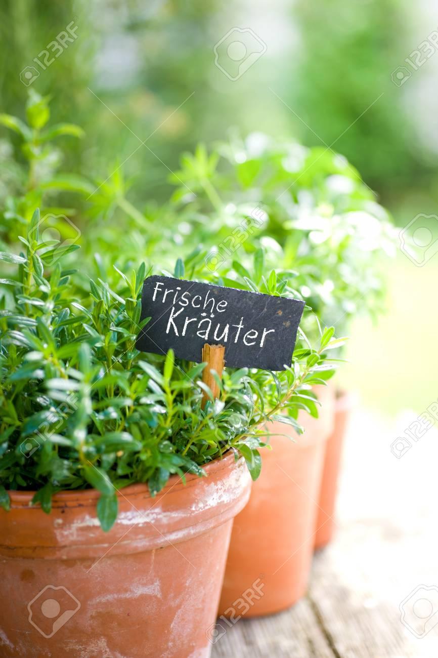 Frische Kr�uter Stock Photo - 13983900