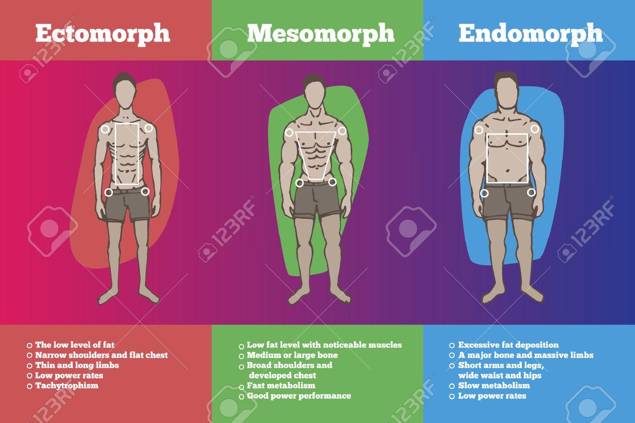 Men body types diagram with three somatotypes royalty free cliparts men body types diagram with three somatotypes stock vector 54776481 ccuart Image collections
