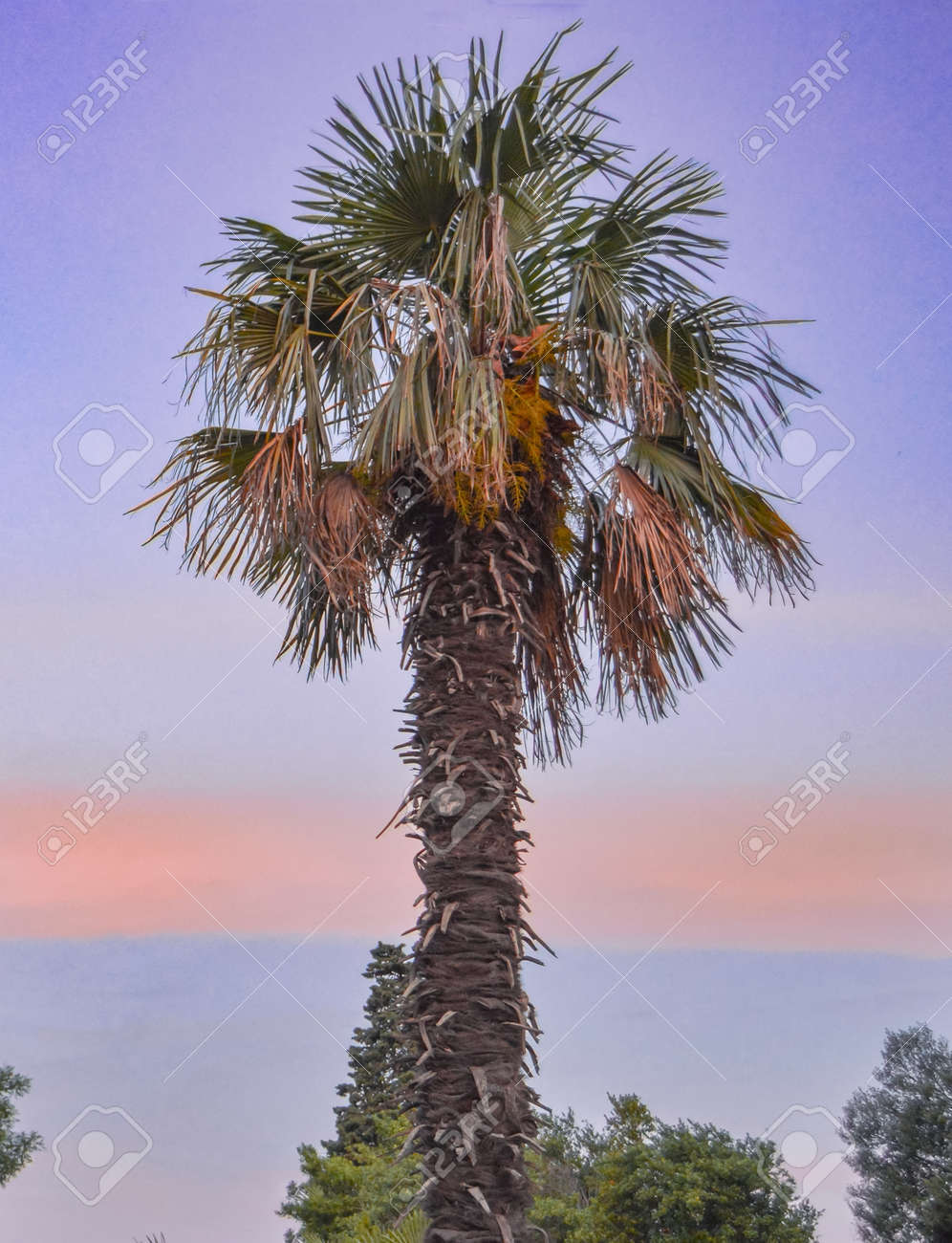 One palm tree on the background of a beautiful sunset, vertical photo. - 168250681