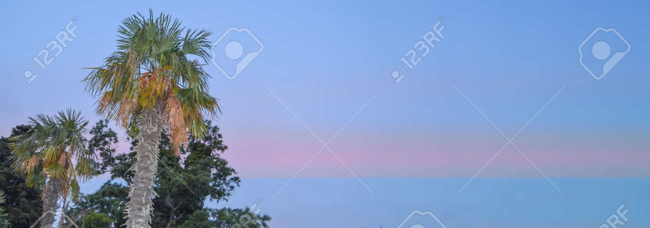 Tropical landscape banner background. Coconut palm against THE BACKGROUND of the SUNSET LILAC SKY, a copy of the space. - 168985176