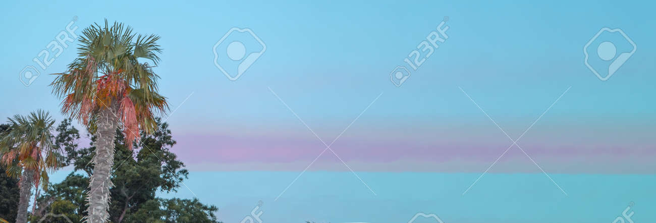 Tropical landscape banner background. Coconut palm against THE BACKGROUND of the SUNSET LILAC SKY, a copy of the space. - 168985179