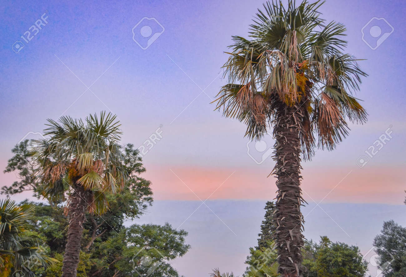Tropical landscape banner background. Coconut palm against THE BACKGROUND of the SUNSET LILAC SKY, a copy of the space. - 168985180