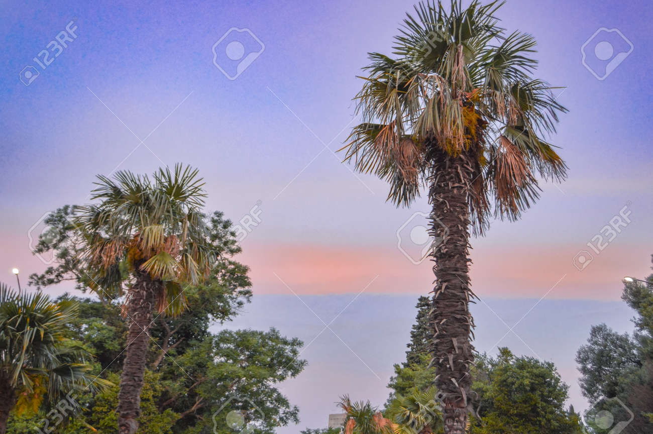 Tropical landscape banner background. Coconut palm against THE BACKGROUND of the SUNSET LILAC SKY, a copy of the space. - 168985181