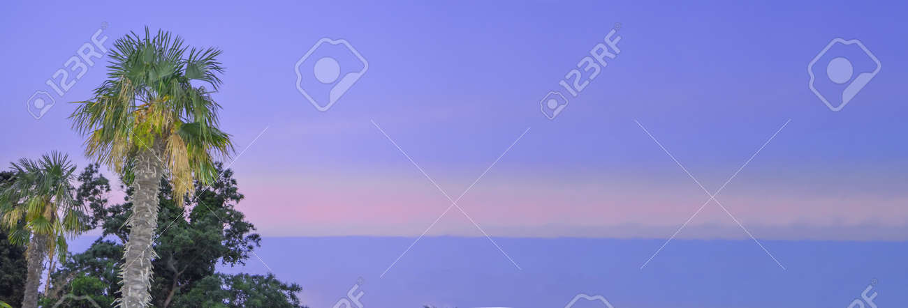 Tropical landscape banner background. Coconut palm against THE BACKGROUND of the SUNSET LILAC SKY, a copy of the space. - 168985183