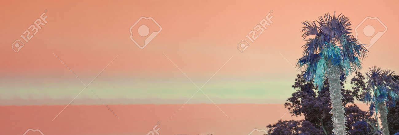 Tropical landscape banner background. Coconut palm tree against the BACKGROUND of the SUNSET orange SKY, a copy of the space - 169661600