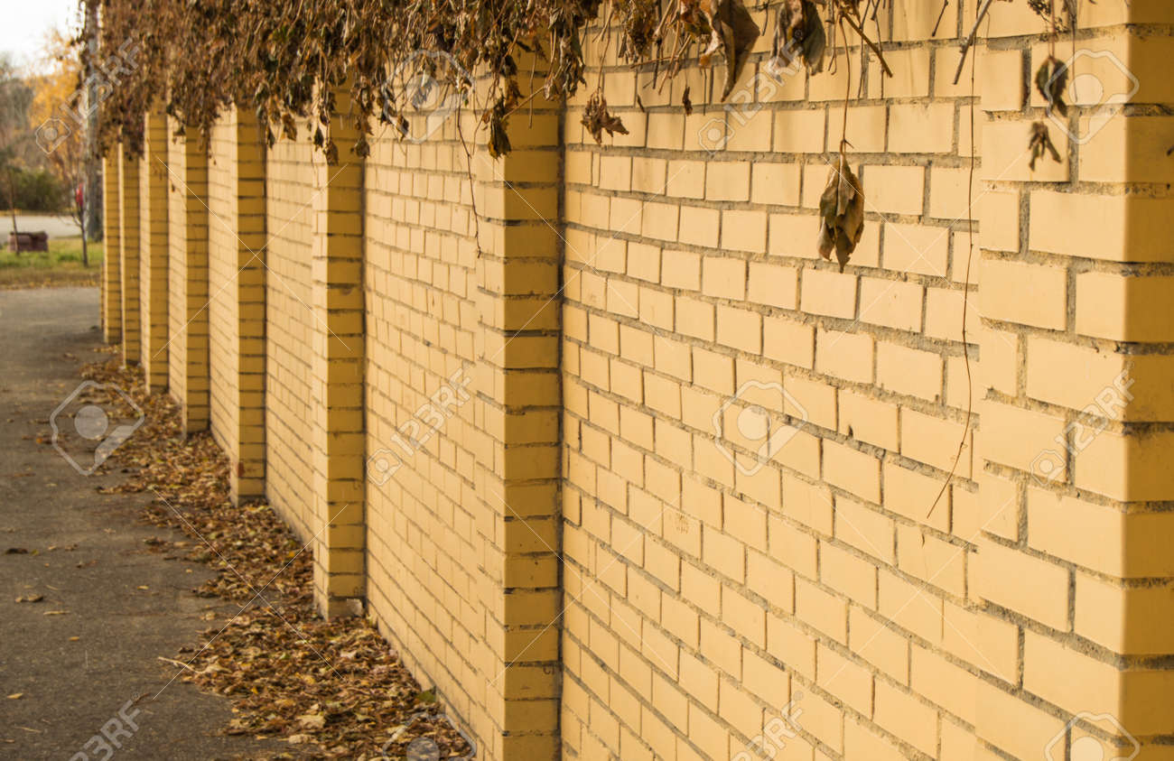 The YELLOW brick fence wall, overgrown with dry plant branches and grass on autumn street, in the open - 169661601