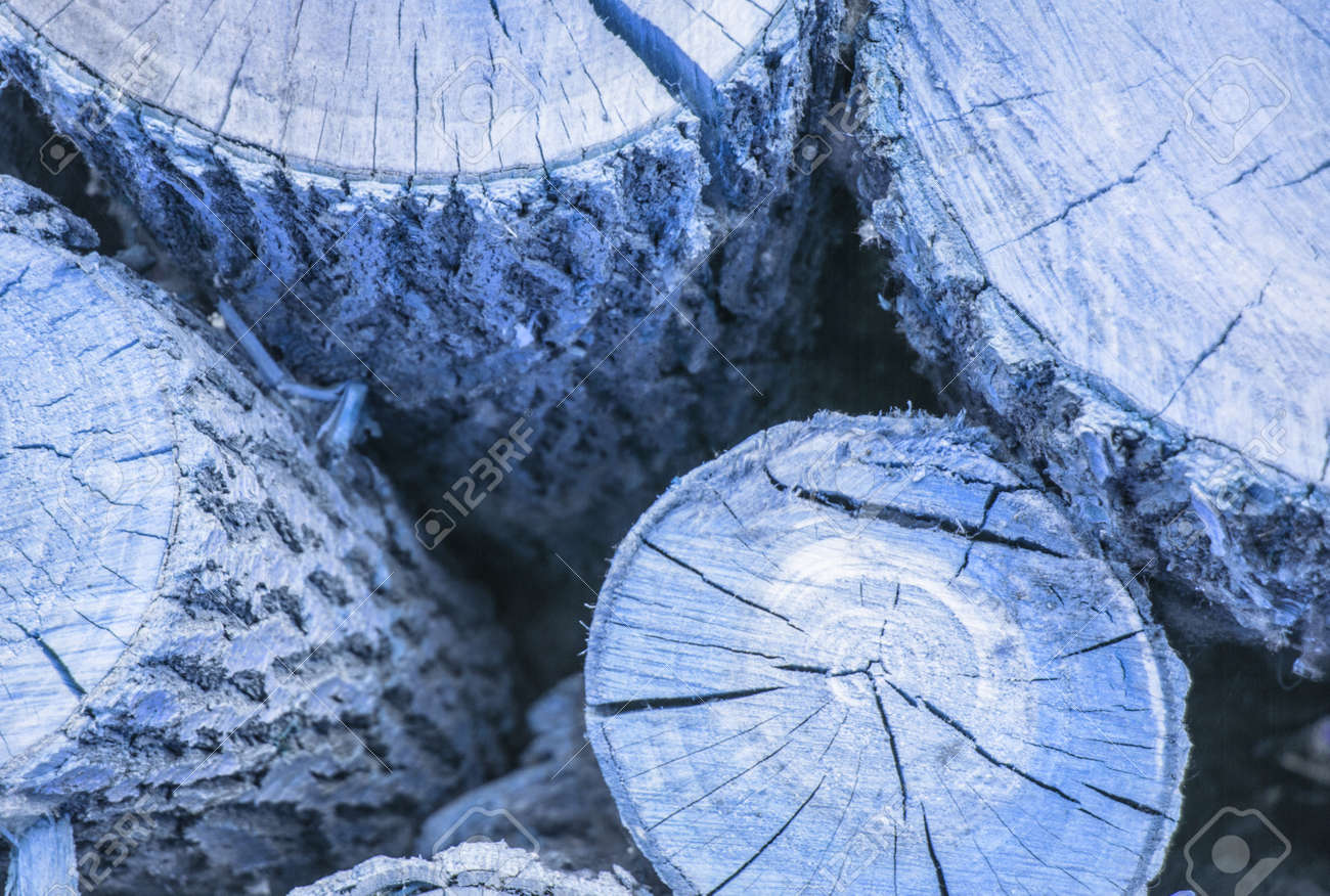 Round log cut with wood texture with crevices and knots, blue tinted wood background - 169661609