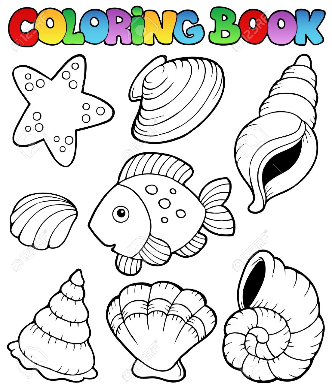 Libro Para Colorear Con Conchas Marinas Ilustración Vectorial