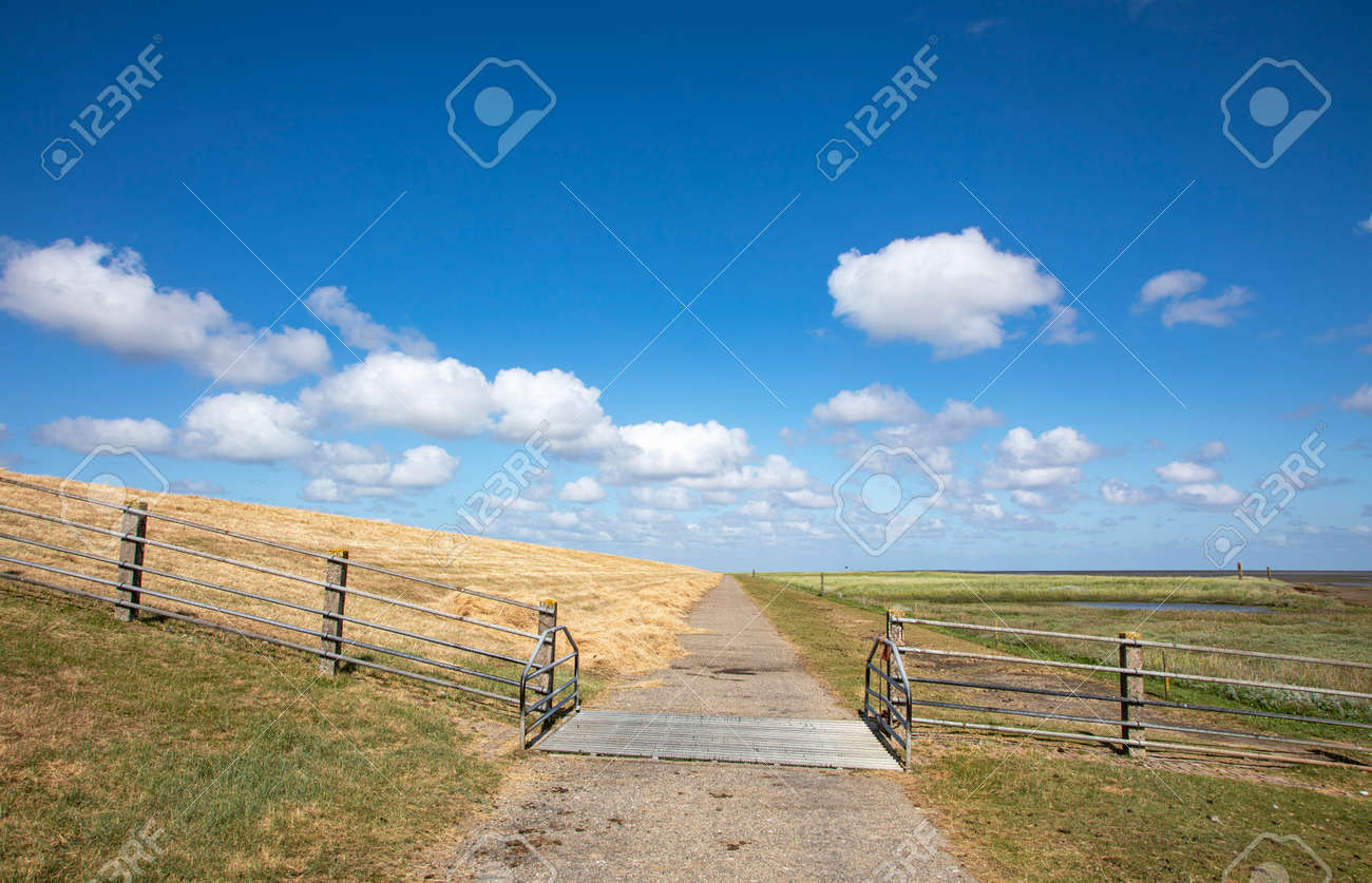 Dike with cattle grid along the coast of the island Schiermonnikoog on the wadden sea side in the netherlands - 169481656