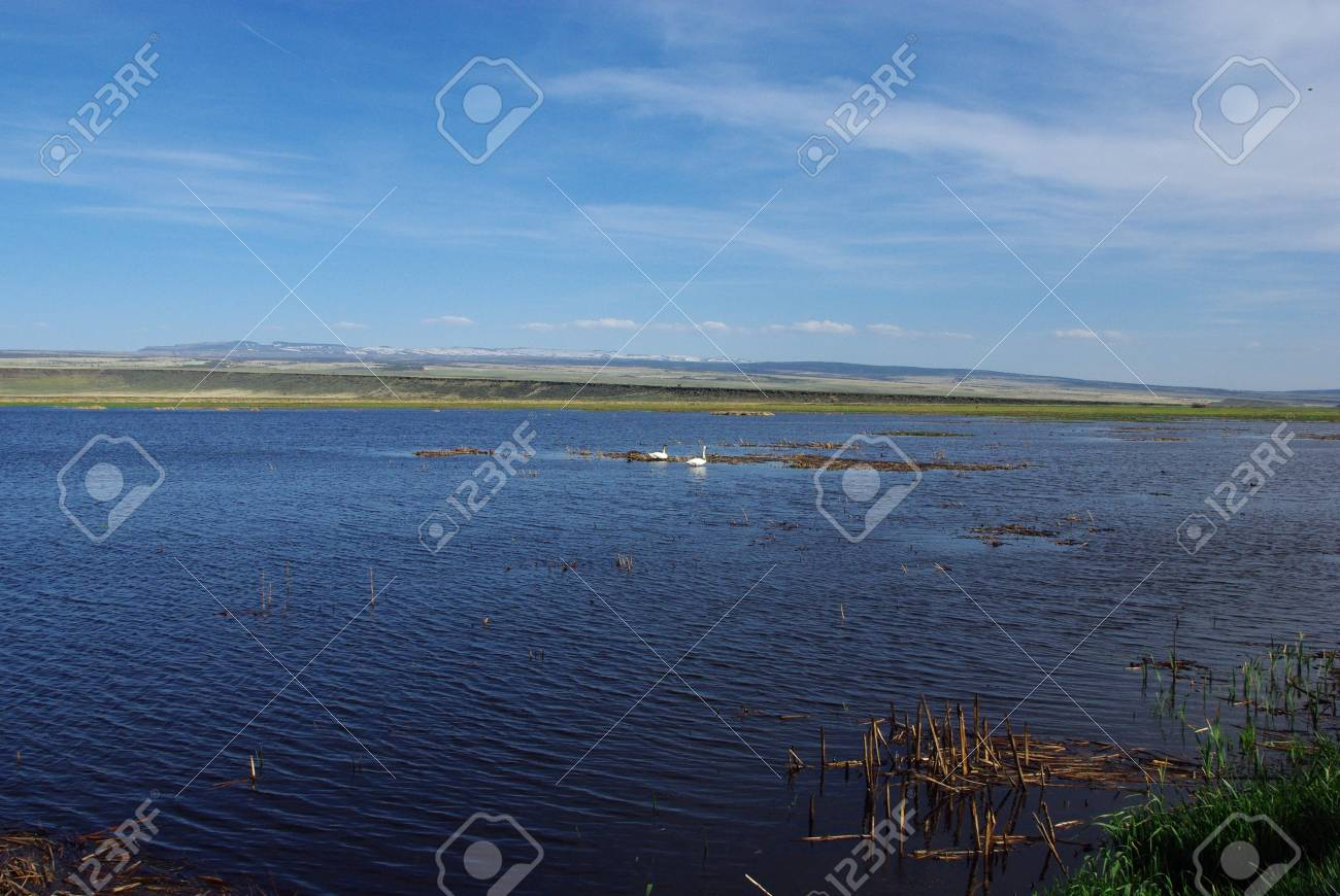Lonely swans in vast spaces, Malheur National Wildlife Refuge,