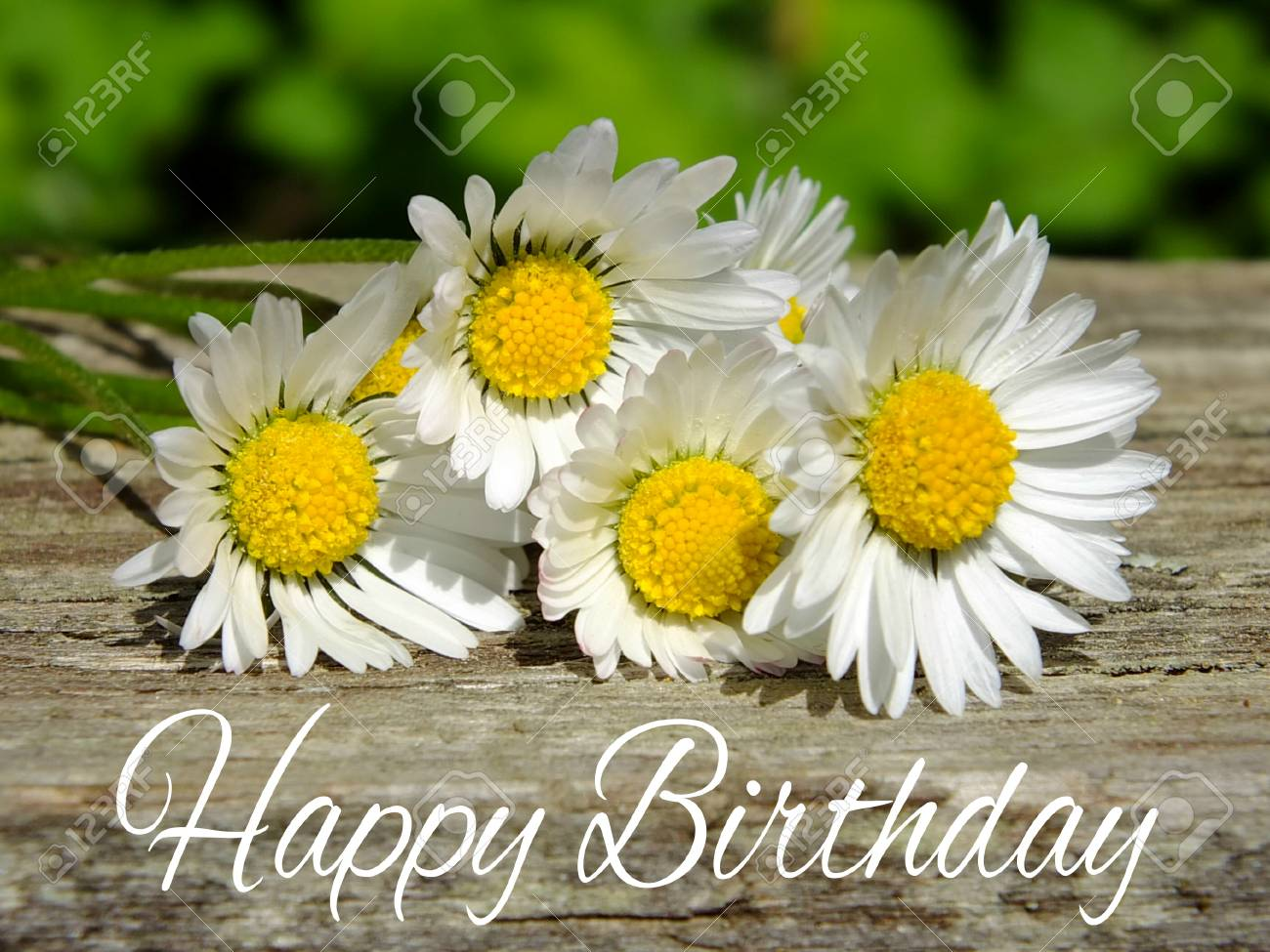 Image of birthday greetings with daisies Standard-Bild - 35059450