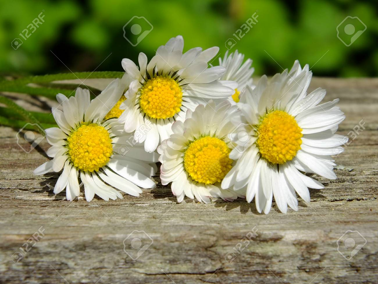 Daisies on wooden background with copy space Standard-Bild - 35180407