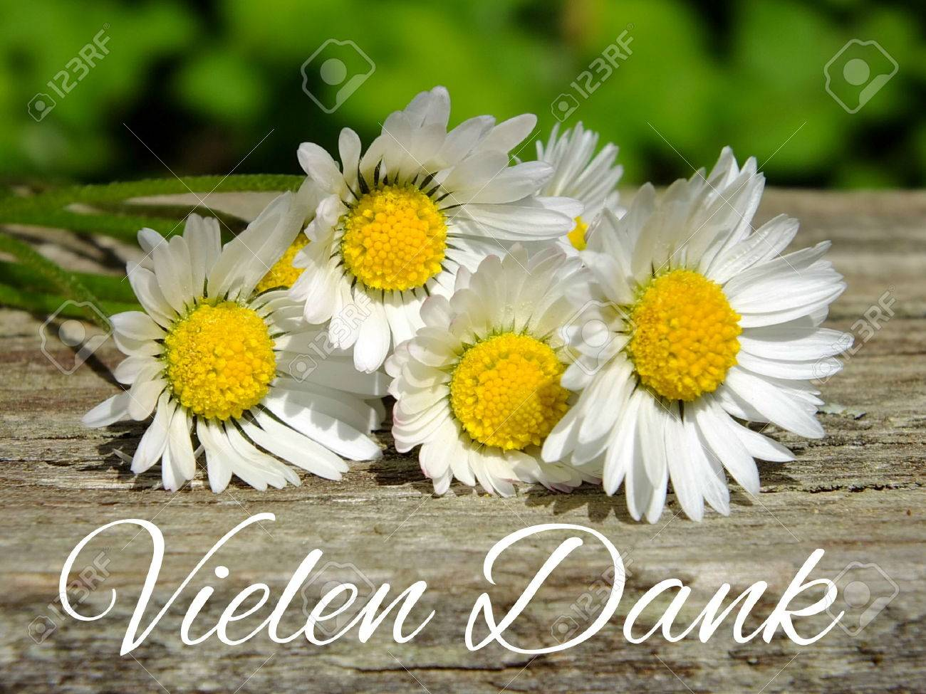 Image of daisies with German lettering Standard-Bild - 35143393