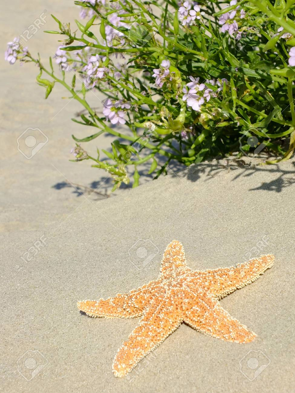 Image of a sea star Standard-Bild - 35403854