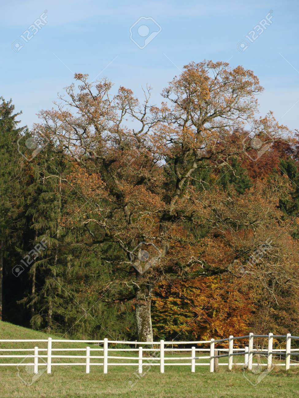Weisser Zaun Holz Lizenzfreie Fotos Bilder Und Stock Fotografie
