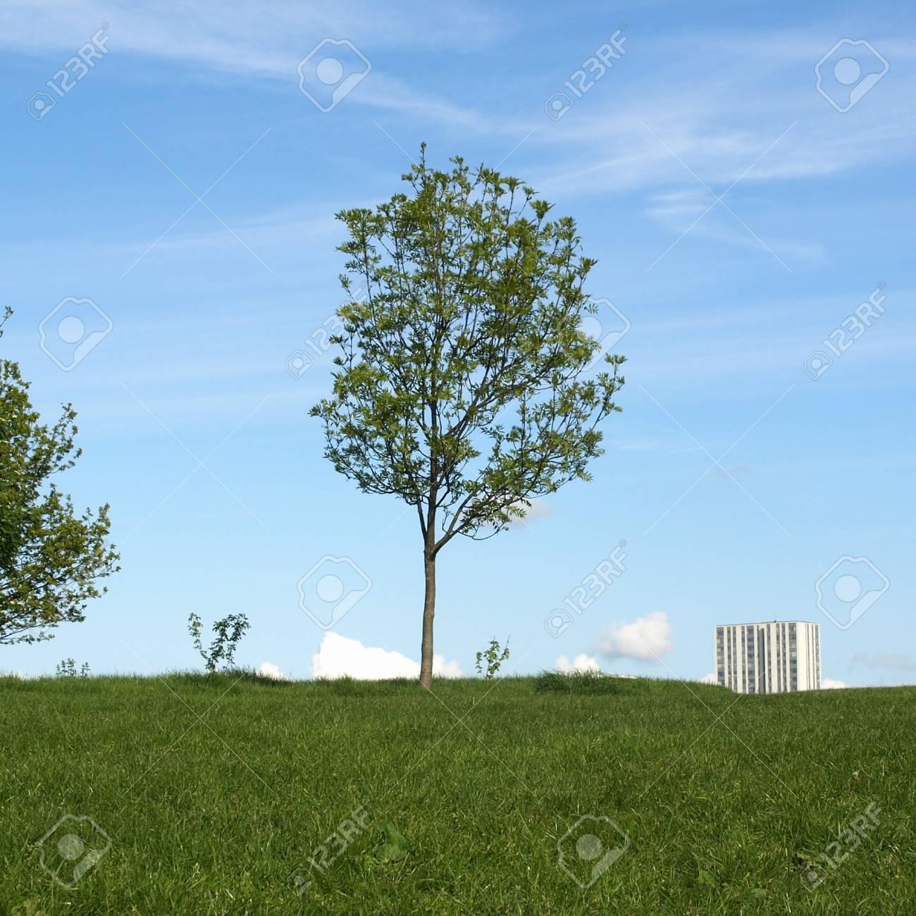 Primrose Hill park in London, England, UK Stock Photo - 7236134