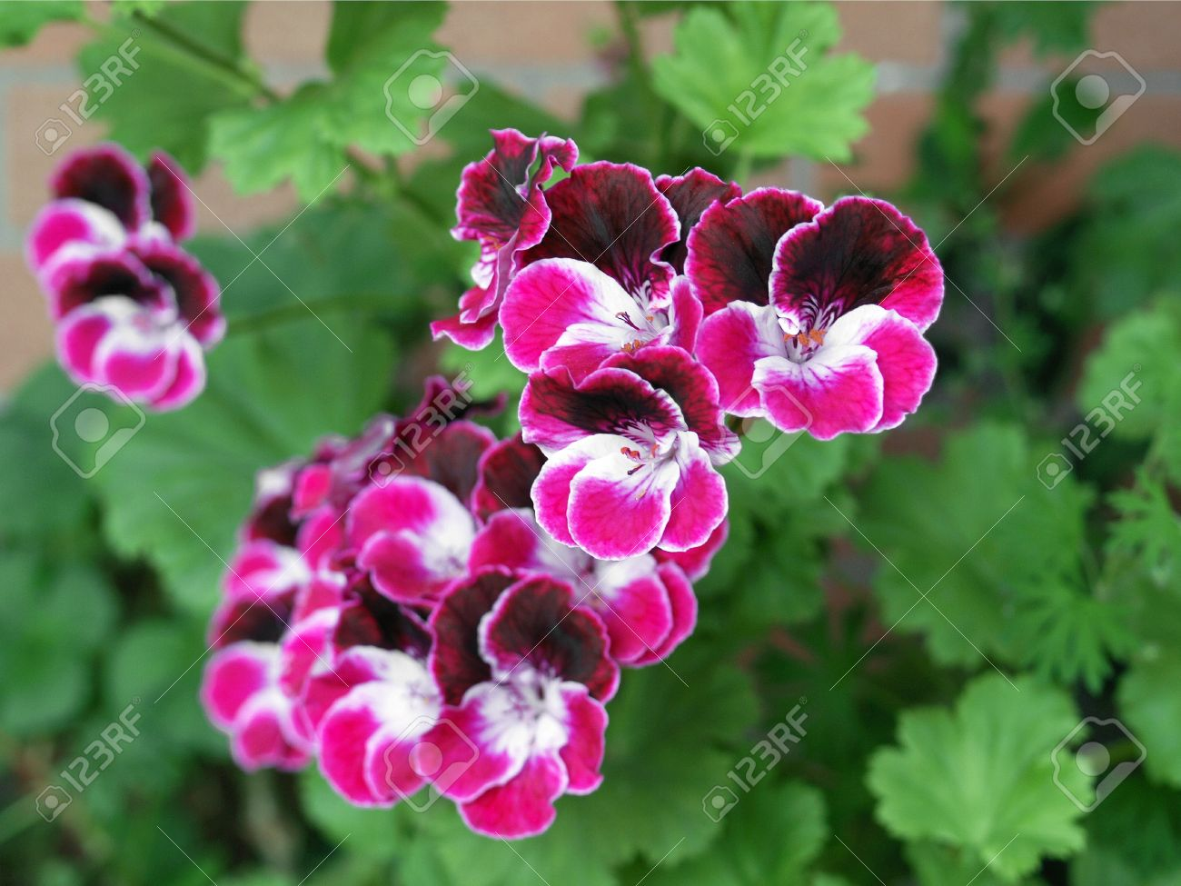 Magnoliophyta | Tentative Plant Scientist