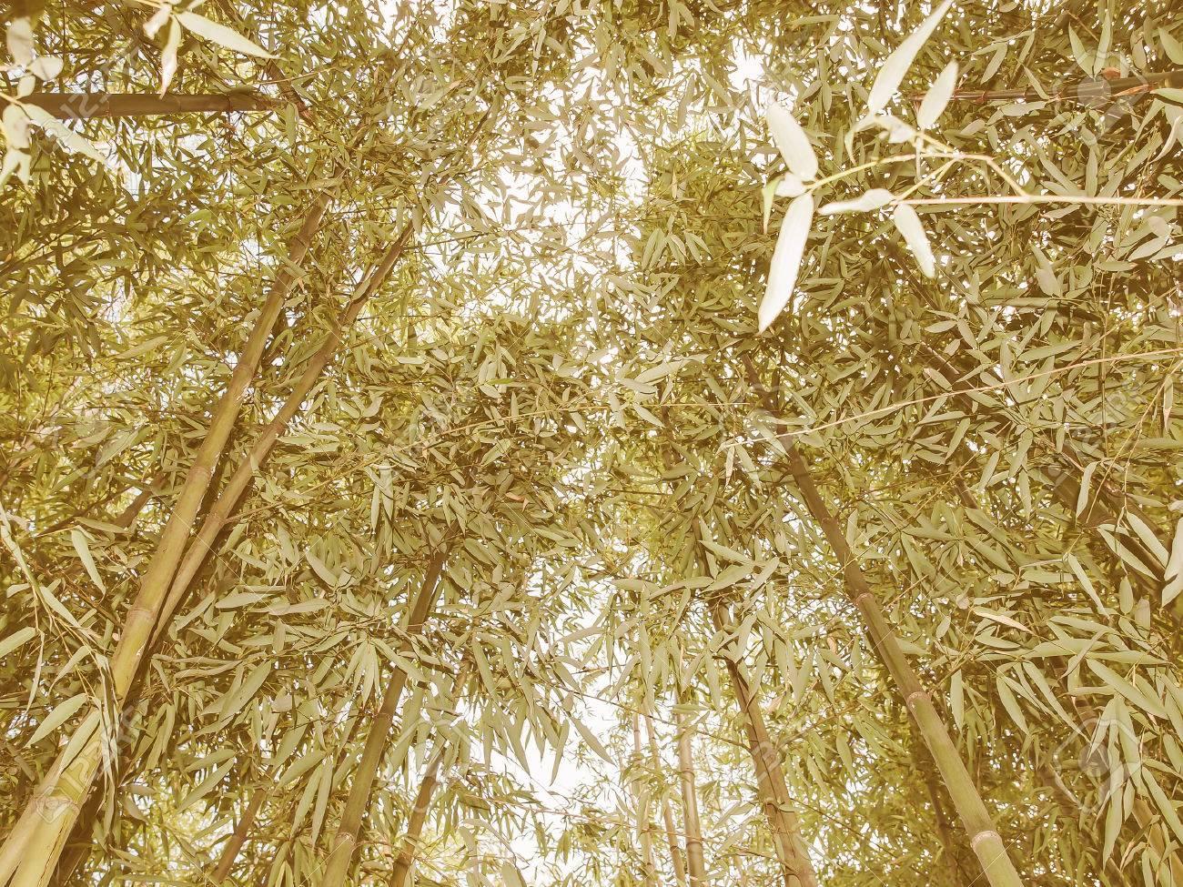 Vintage Looking Bamboo Flowering Perennial Evergreen Plants In