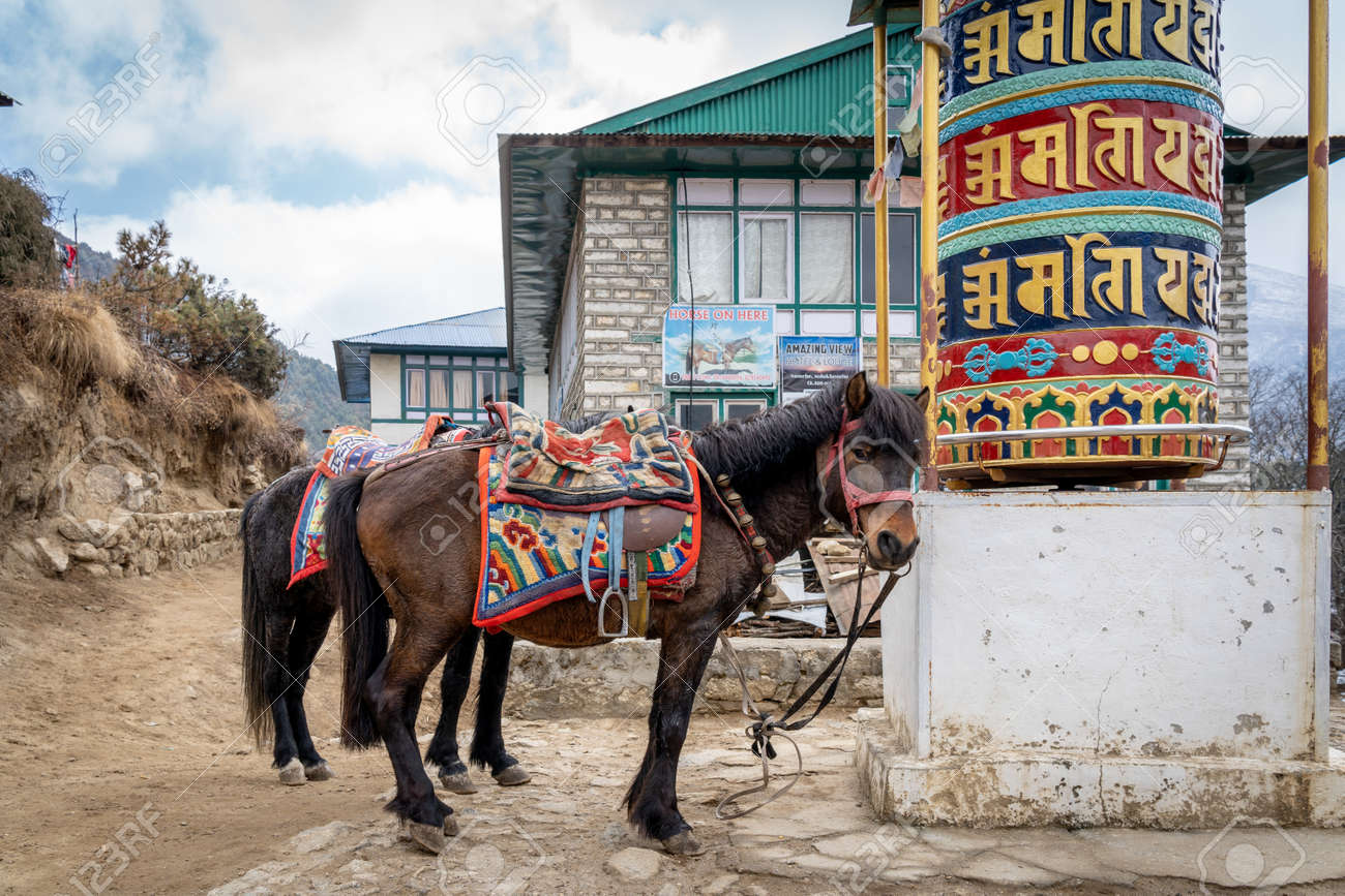 Two pack horses tied to a prayer wheel beside the trail. - 169836050