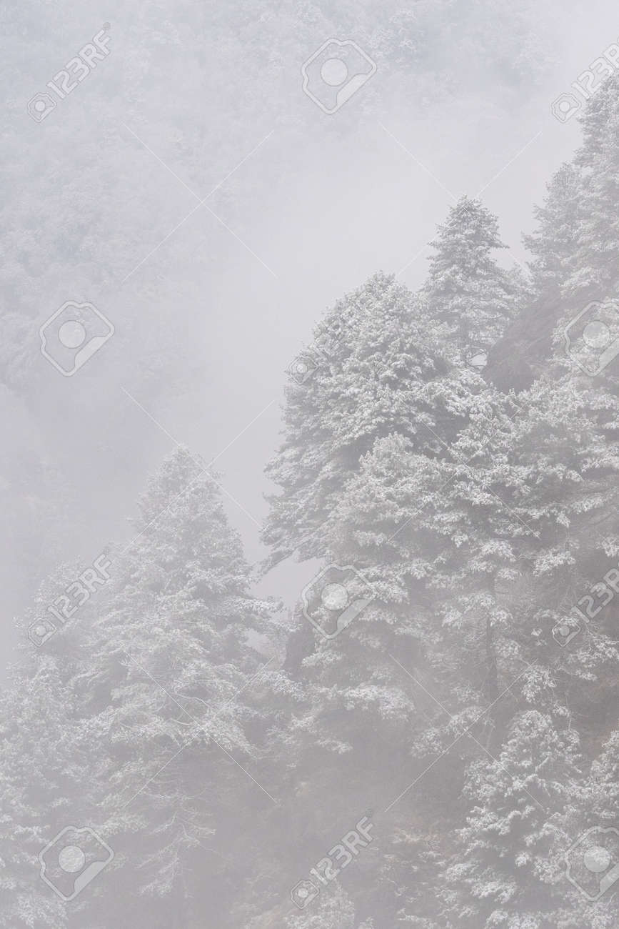 A snow covered tree covered hillside in the Himalaya Mountain. - 169836062