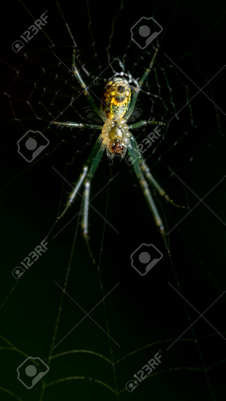 A macro shot of a spider on a web. - 170388692