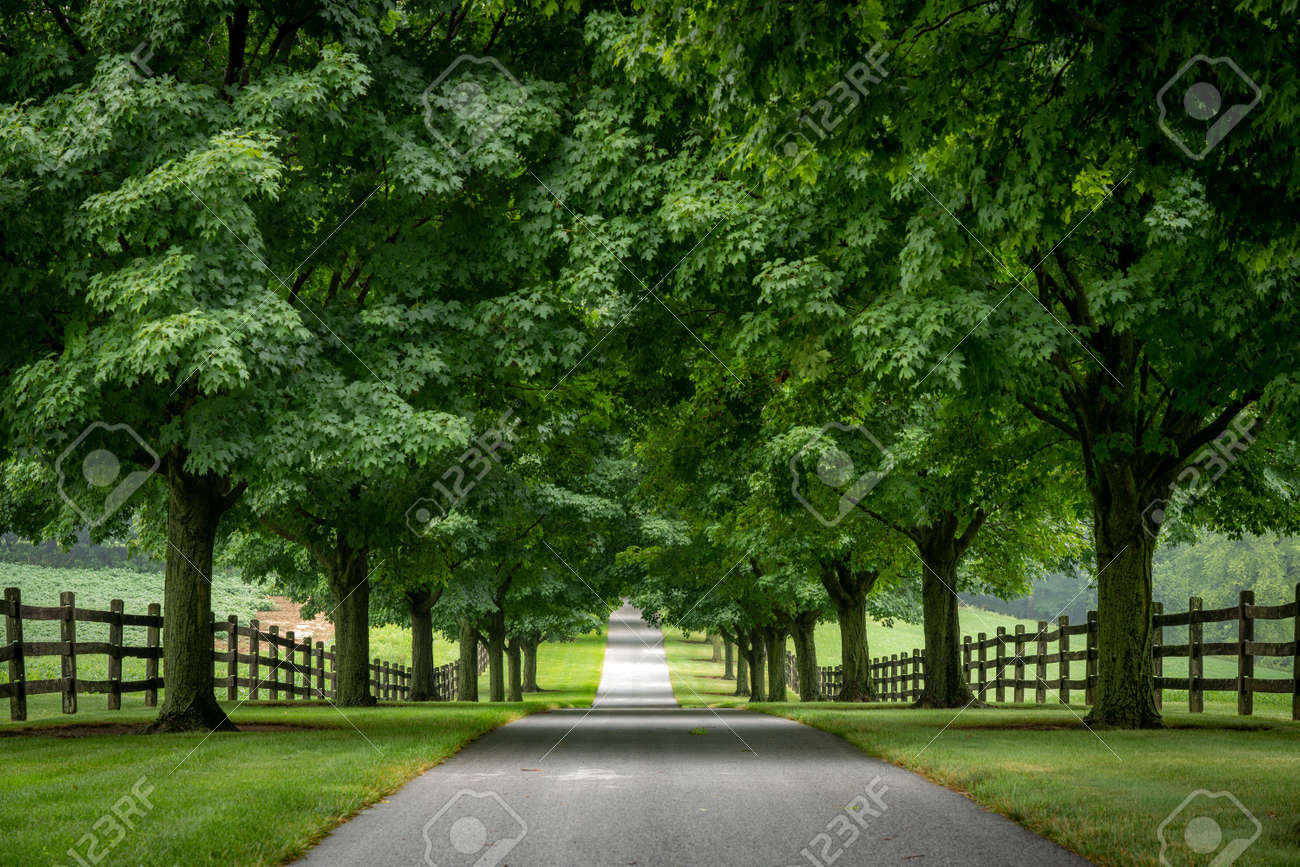 A paved road lined with trees on a cloudy summer day. - 171189345